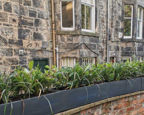 Window boxes Glasgow-2019