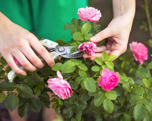 Garden Reports, Surveys & Consultancy
