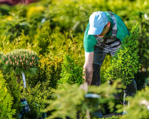 Soft Landscaping & Planting